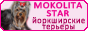 Yorky-Best.Ucoz.Ru: фотографии Йоркширского терьера. Полезно знать